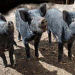 3 hogs taking up space in your home (and they're not your family)