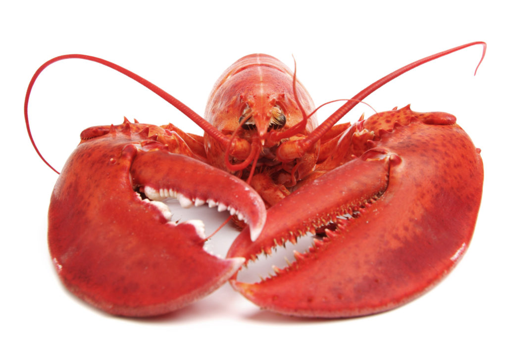 What a Lobster Can Teach about Getting Organized